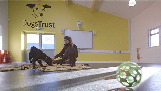 dogs trust video interviews