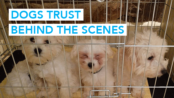 Dogs Trust Behind The Scenes Video
