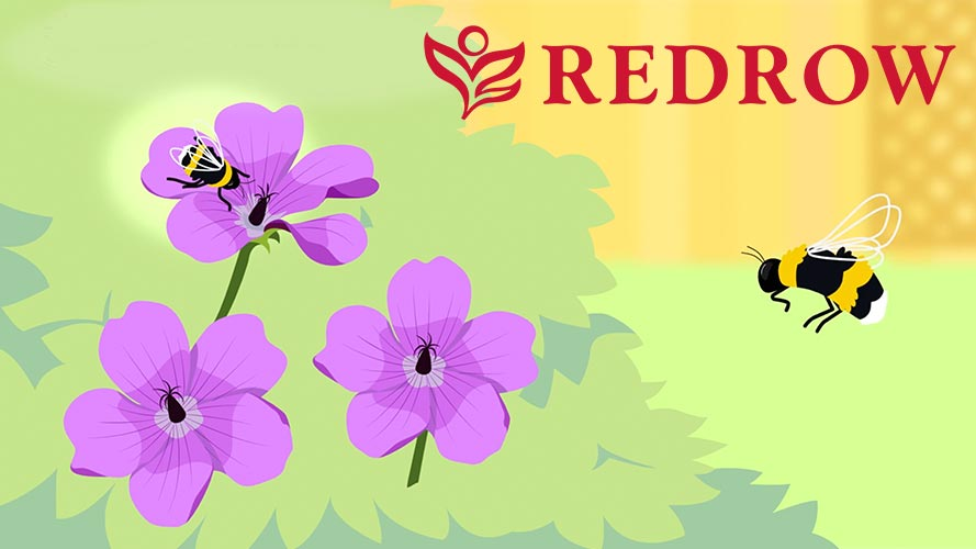 Redrow Bumblebee Charity Animation